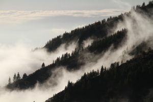 Conference: Forests for Biodiversity & Climate Change @ Charlemagne building, European Commission